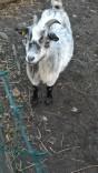 PhotoChooser-09b57791-cfcd-4715-ab0f-393ccc99eb91